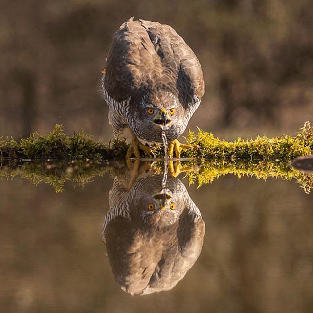Reflection | Photography by ©Csilla Zelko #WildlifePlanet