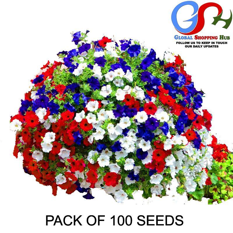 100 Seeds Bag Mix Colors Bonsai Rare Petunia Flowers Fresh Imported Seeds Petunia Plant Petunias Petunia Flower