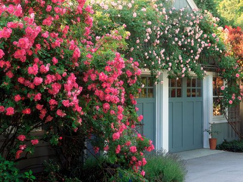 How to Grow a Rose Garden - Gardening Tips - Country Living