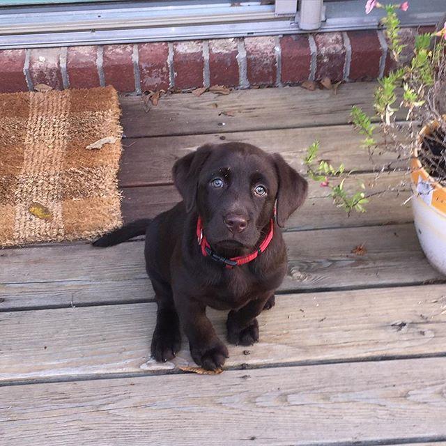 22 Photos Of Labrador Retriever Puppies To Brighten Your Day Labrador Retriever Retriever Puppy Labrador Retriever Puppies