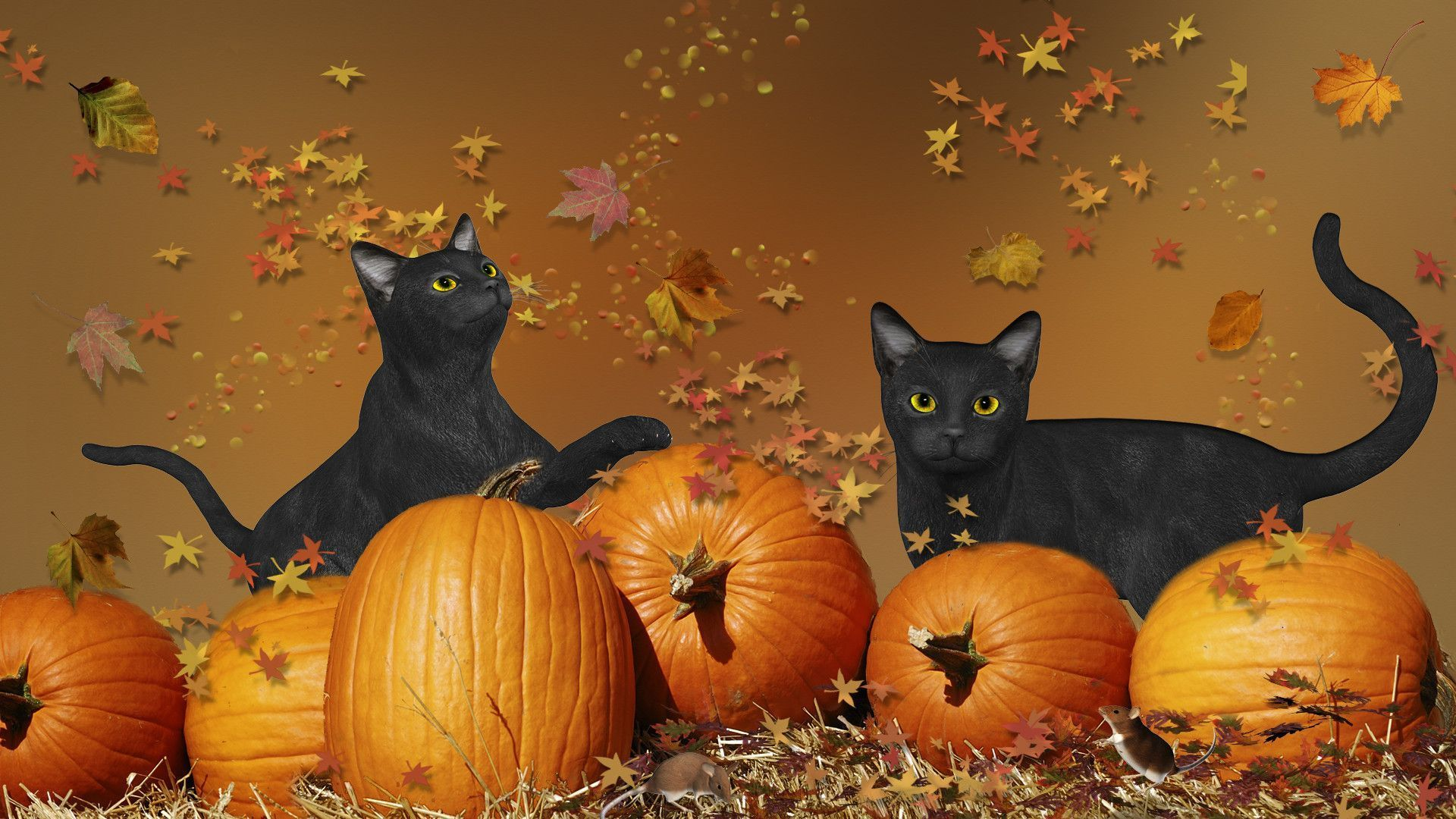 Halloween Cat Wallpapers Wallpaper Cave Black Cat Halloween Halloween Cat Cute Halloween