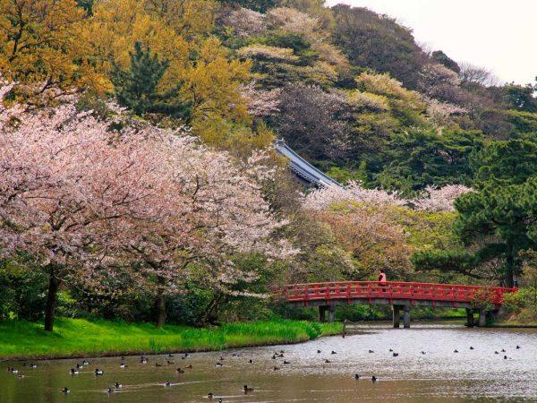 Sankeien Garden In Yokohama Japanistry Garden Cherry Blossom Views