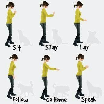 Pin By Tammy Smith On Dog Care Dog Training Hand Signals Dog