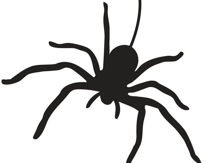 Spinne Vorlage zum Ausdrucken | halloween pumpkin | Pinterest ...