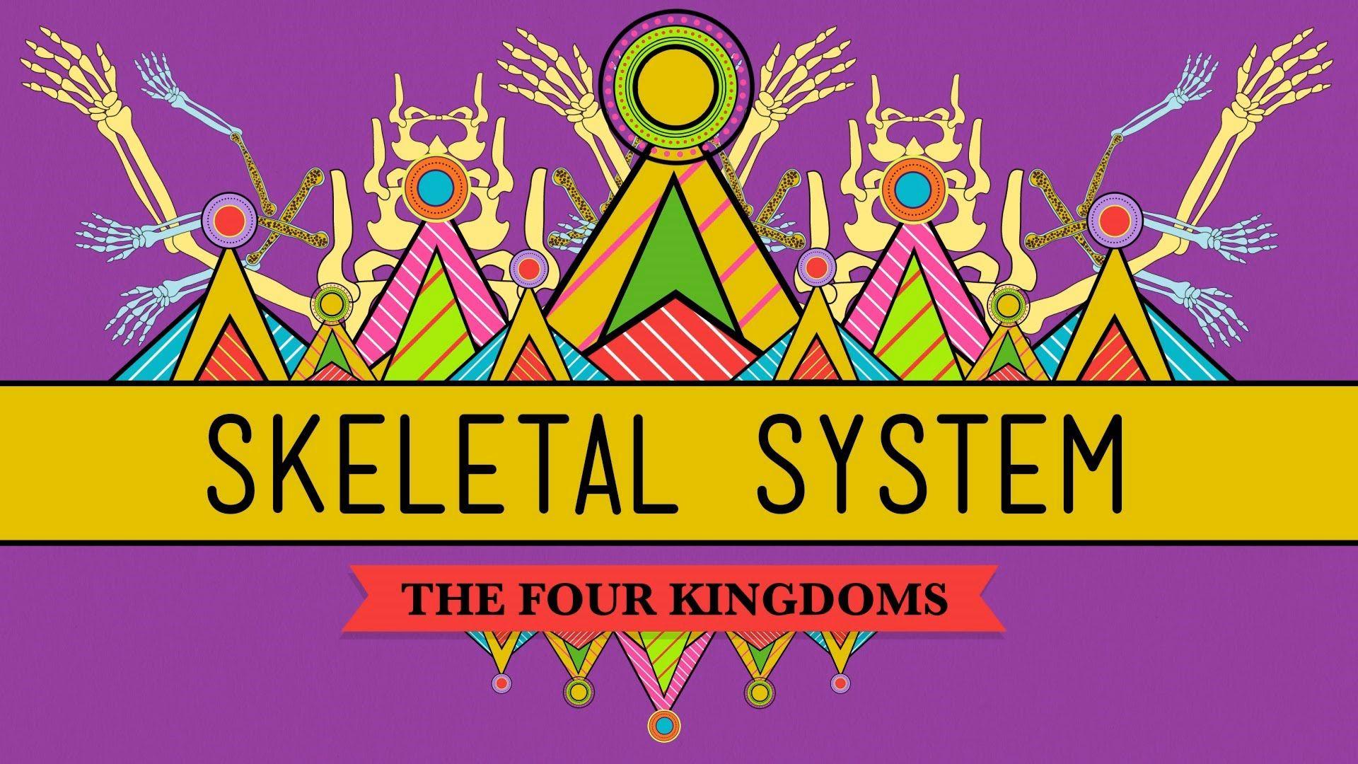 Week 2 The Skeletal System It S Alive