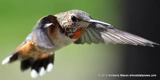 Image result for hummingbird woman