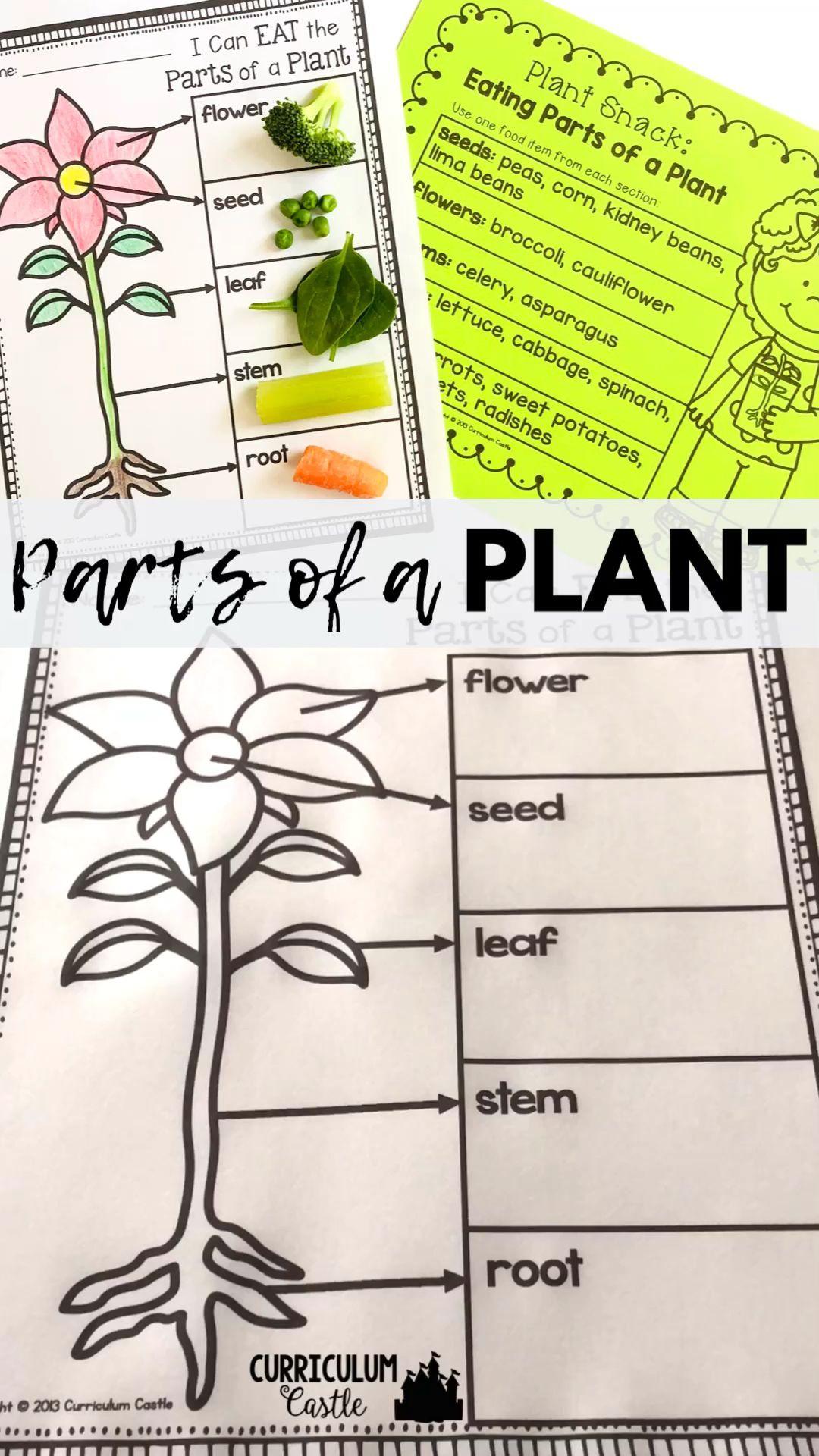 Parts Of A Plant Activity Video Plant Life Cycle Plant Activities Parts Of A Plant [ 1920 x 1080 Pixel ]