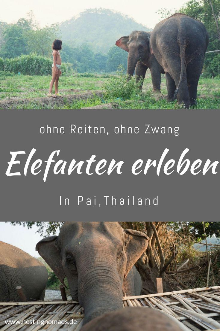 Elefanten hautnah erleben in Pai / Thailand - ein Traum #backpackingthailand