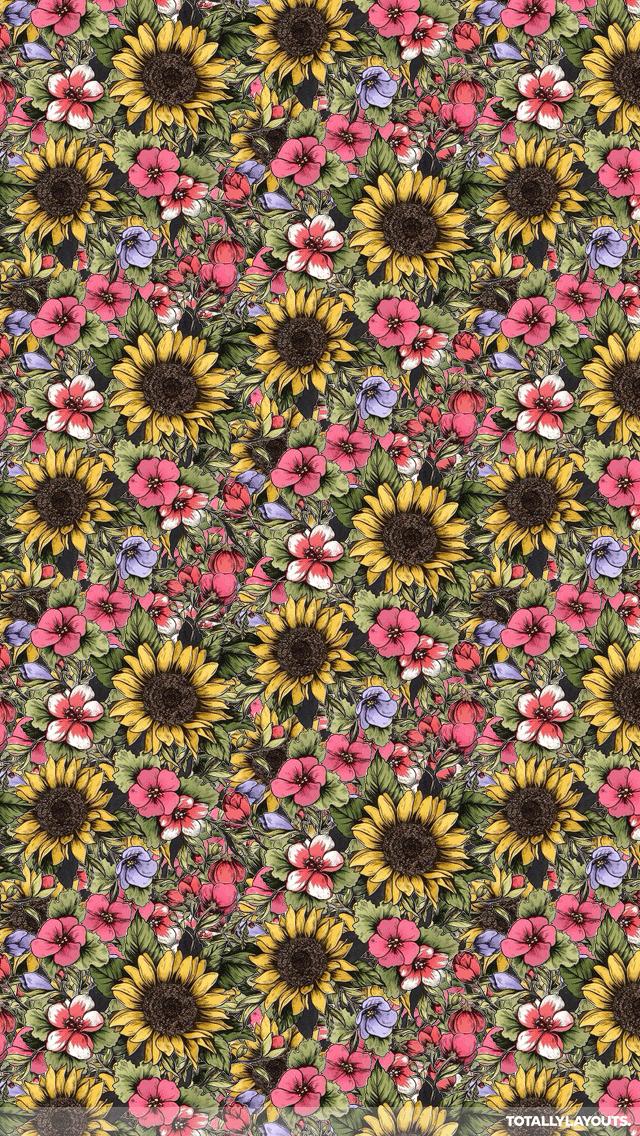 sunflower iphone wallpaper - Google Search   Sunflower ...