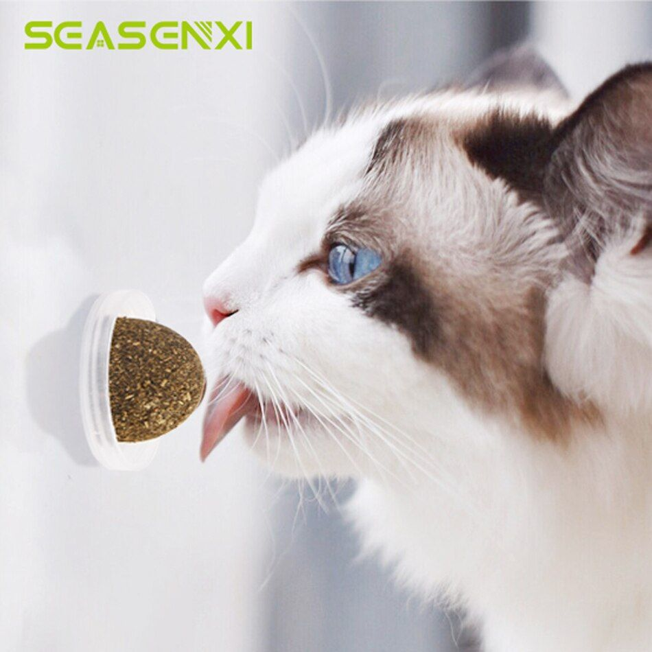 Natural Catnip Toys For Cats Crazy Healthy Cat Toys For Kitten Edible Treating Cleaning Teeth Cat Supplies Pet Toy Pet Products In 2020 Catnip Cat Toy Pet Toys Cat Toys