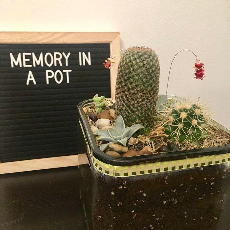 Live Succulent and Cactus Arrangement in Clear Glass Square Container   - Live succulent and cactus arrangement -