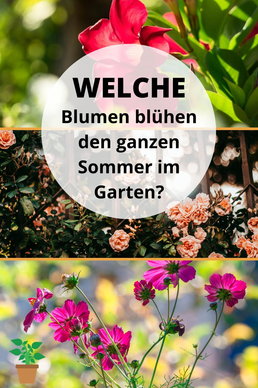 Welche Blumen blühen den ganzen Sommer im Garten in 2020 ...