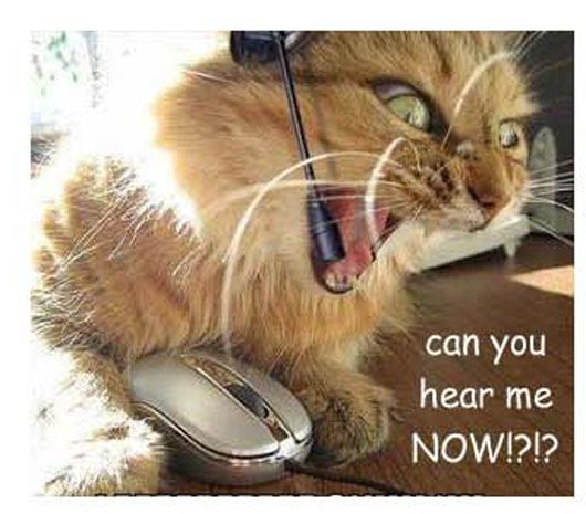 7 Can You Hear Me Now Funny Cat Photos Funny Animals Evil Cat