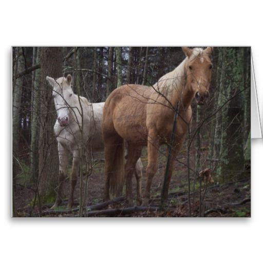 Horses on the farm cards  This card is fully customizable from moving around the picture to adding your own thoughts!