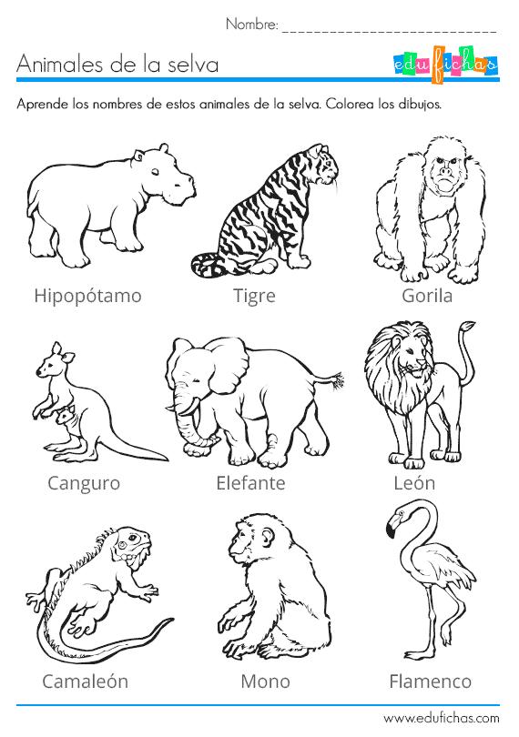 los animales de la selva para colorear … | Pinteres…