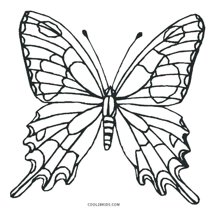 Butterfly Wings Coloring Sheets Pages Page Monarch u2013 ...