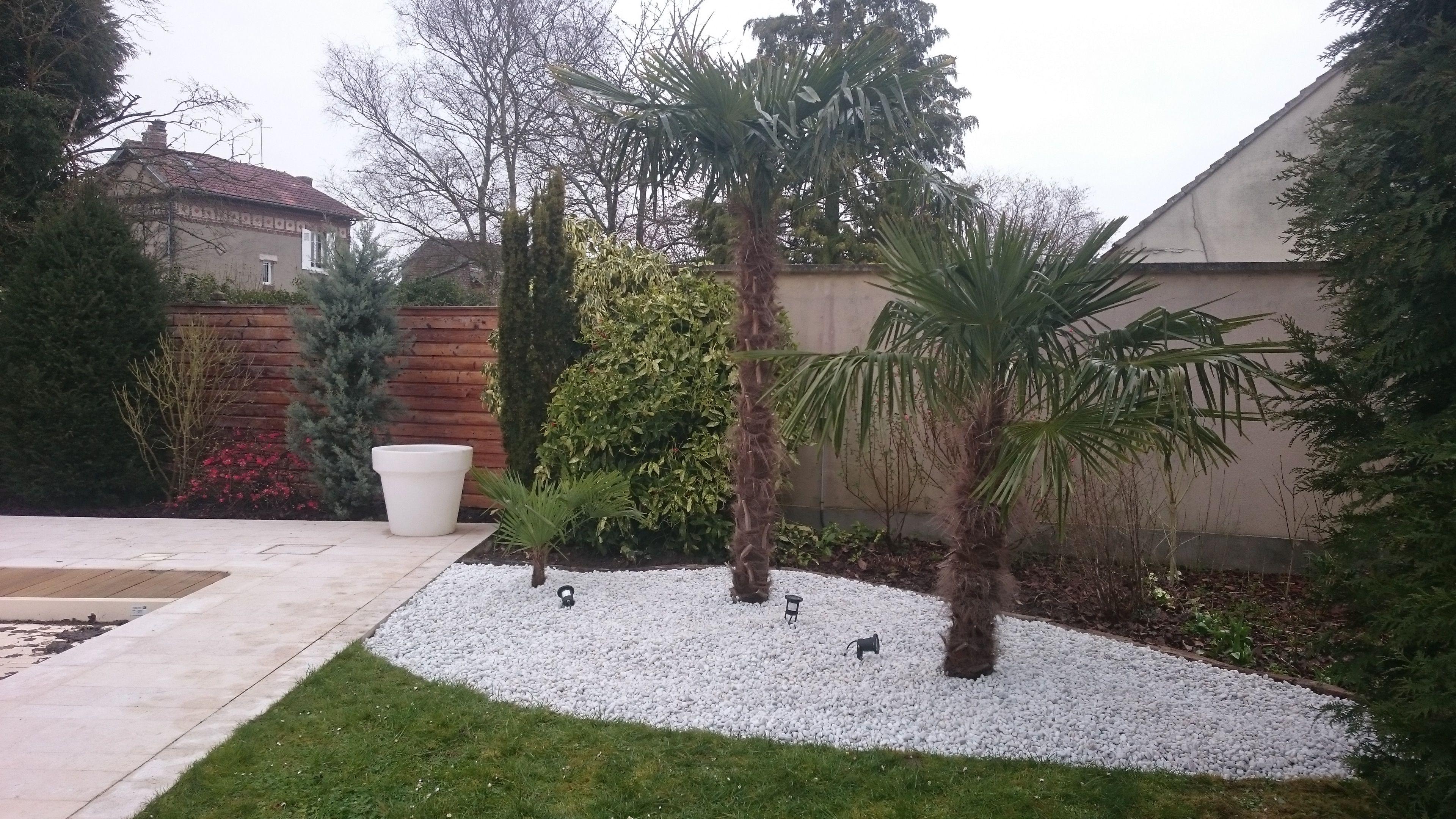 3 Palmiers Trachycarpus Fortuneii Sur Un Lit De Cailloux Blancs