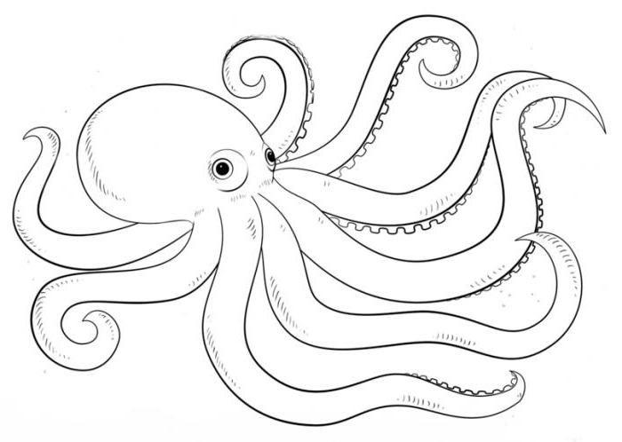 Морские обитатели картинки нарисованные карандашом