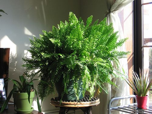 List of house plants that clean indoor air