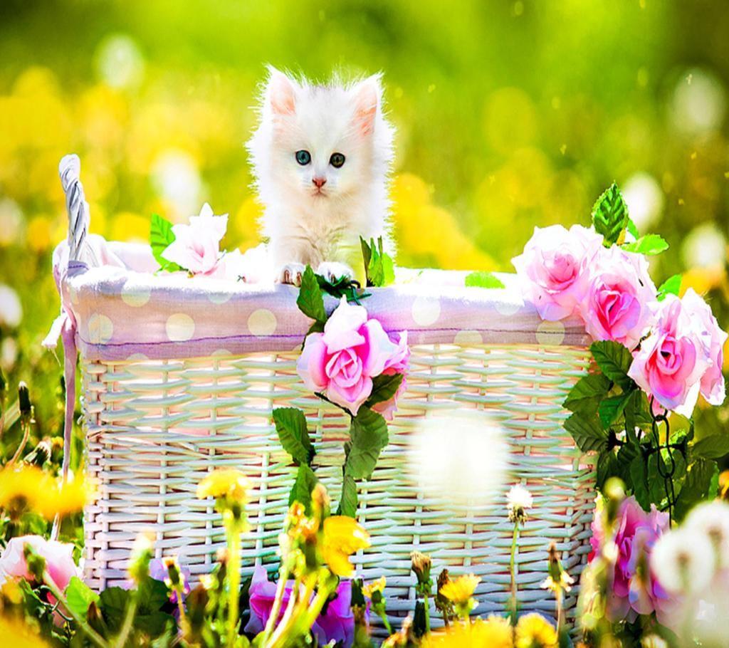 Blackvelvet On Twitter Kitten Wallpaper Kittens Cutest Cute Cats