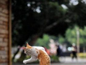 Cat-balett