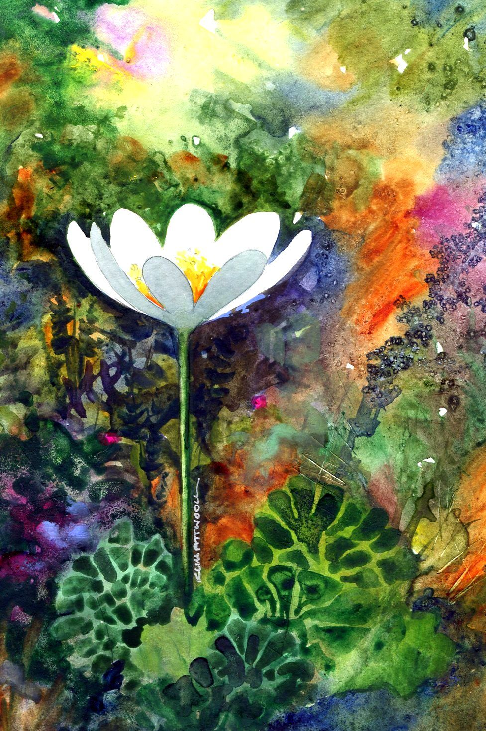Bloodroot watercolor by kim attwooll floral watercolor
