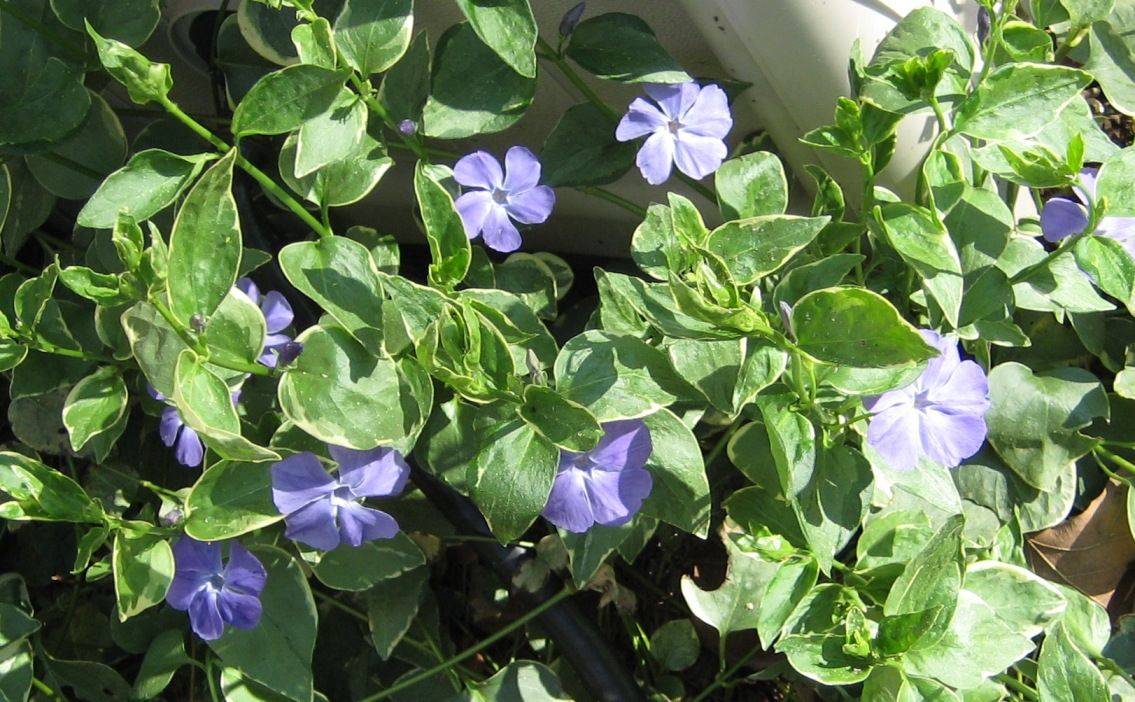 Ivy Flowers-flower basket