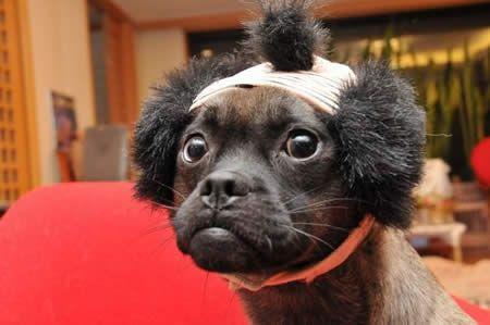 16 Cute \u0026 Funny Dog Haircuts