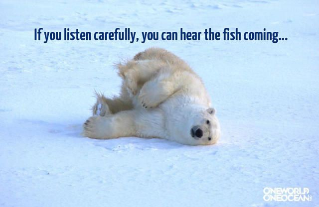 Funny Collection Of Polar Bear Memes Everything Arctic Pinterest