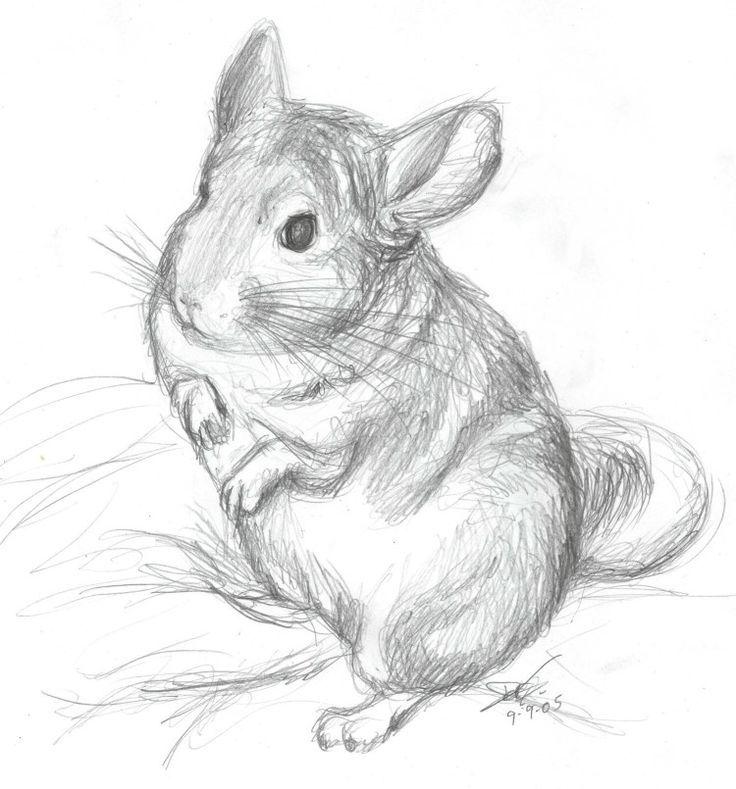 Cute Chinchilla Drawing.
