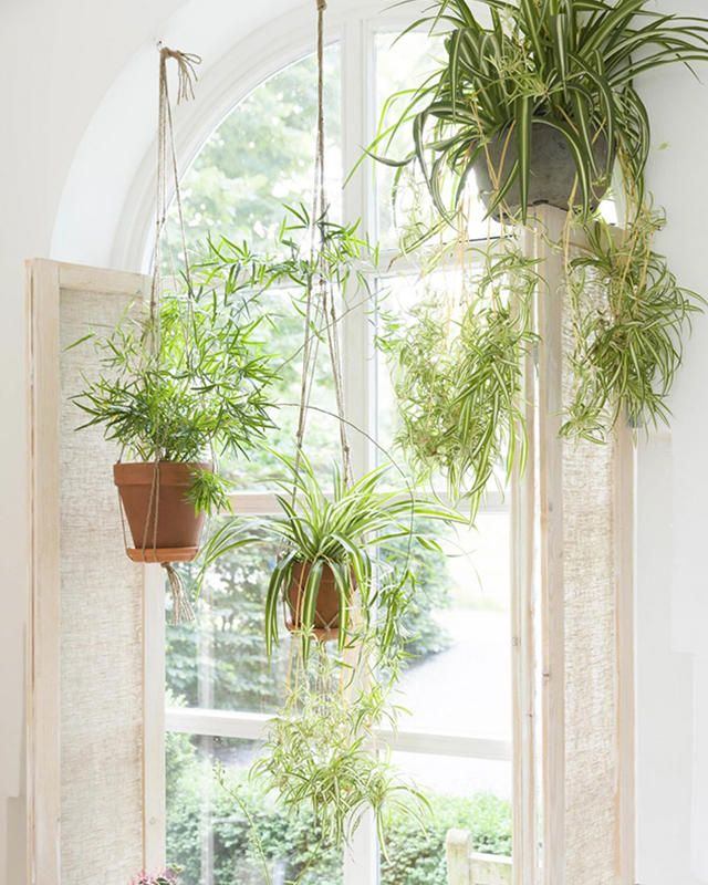 Shower Plants Are Going To Transform Your Bathroom Air Plants Decor Common House Plants Hanging Plants