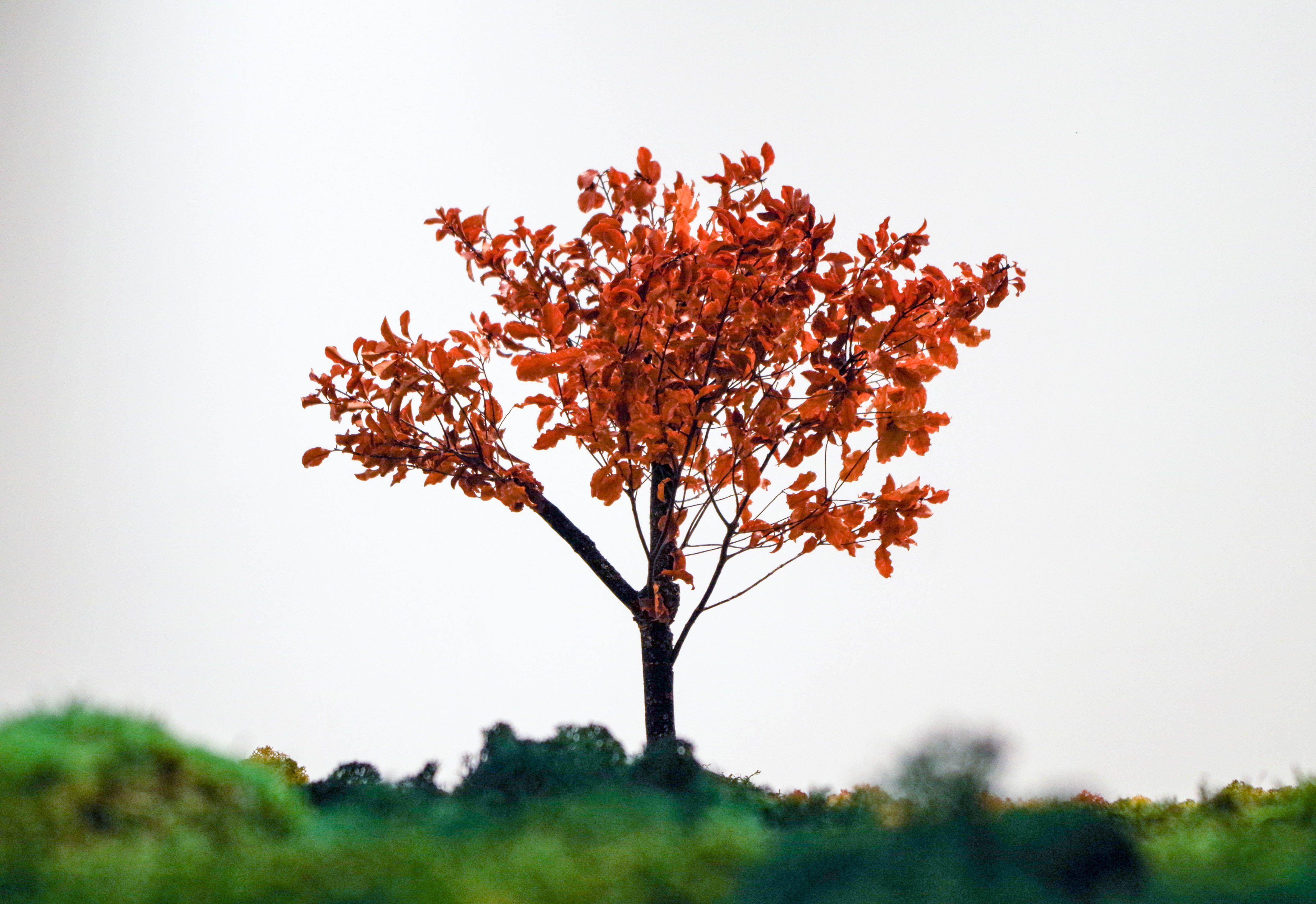""""""" [...] Veinte bonsais se posicionan dentro de esta cartografía vegetal para indicarnos las urbes más pobladas del país. [...] Esther Pizarro. Fuente: Dossier de #ExposicionesUGR. #UnJardinJapones. Foto: Lidia Fernández."""