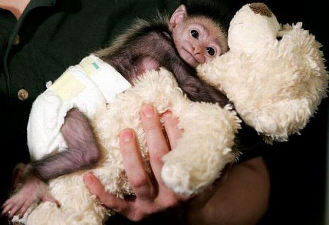 Animals And Stuffed Toys 30 Pictures Animal Space Cute Baby Monkey Baby Monkey Cute Animals
