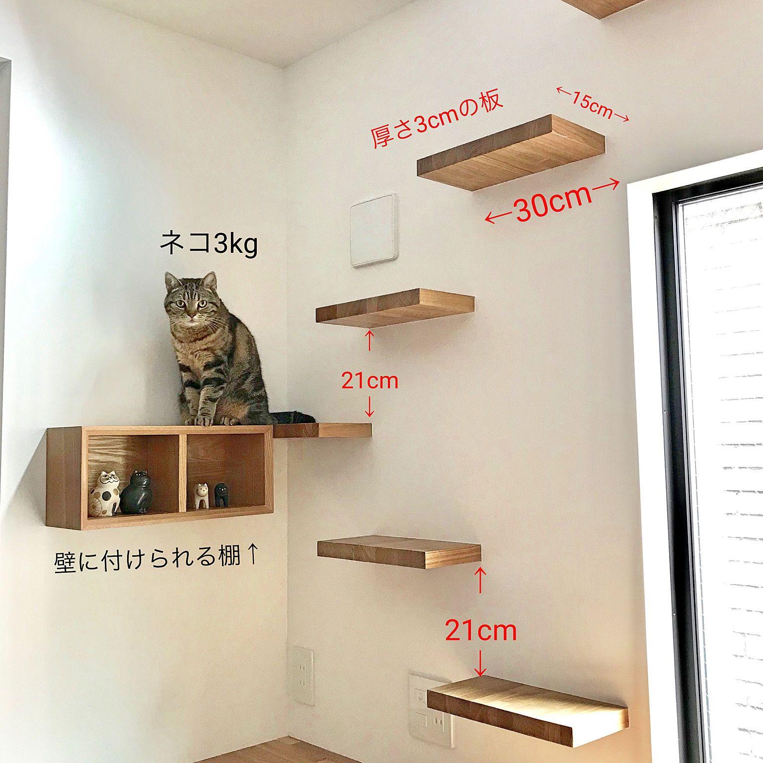 壁 天井 ねこと暮らす 猫のいる暮らし ねこのいる日常 キャットタワー などのインテリア実例 2019 02 01 20 22 58 Roomclip ルームクリップ キャットタワー 猫の家具 ねこ インテリア