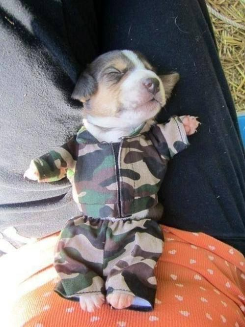Best Outfit Army Adorable Dog - aa1880a82552ece62fa3cc16fb04cdc0  Perfect Image Reference_69130  .jpg