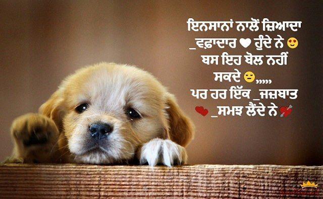 #loveanimals in 2020   Love picture quotes, Punjabi love ...