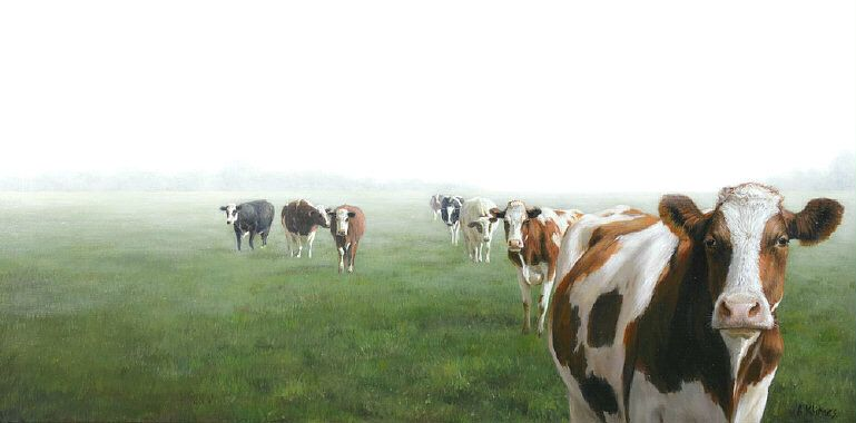 hartslag koe