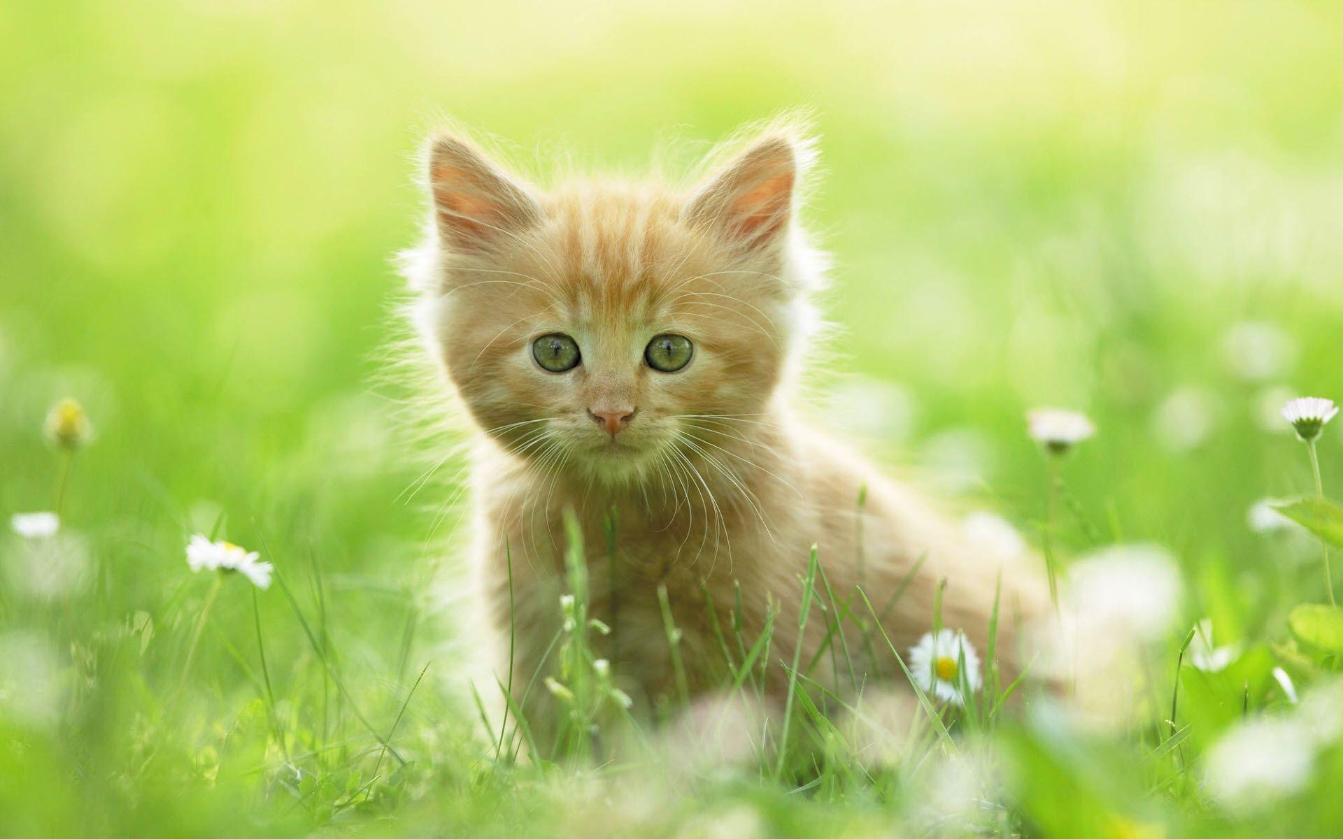 Awwwwww Kittens Cutest Kitten Wallpaper Kitten Pictures