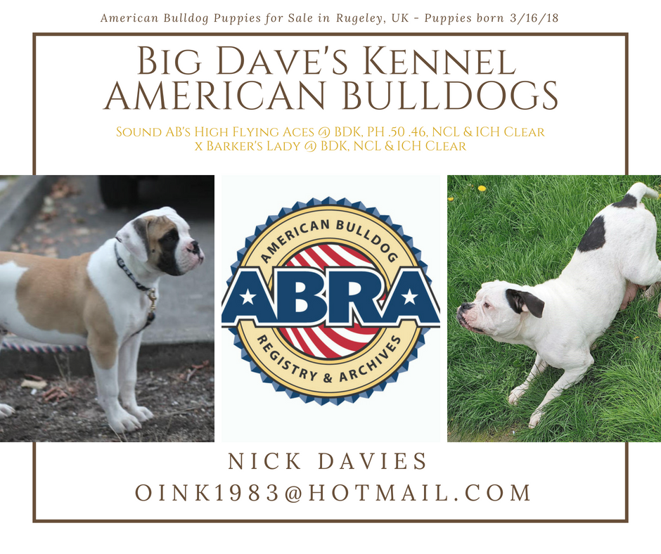 Abra Litter Of The Day Congratulations Nick Big Dave S Kennel