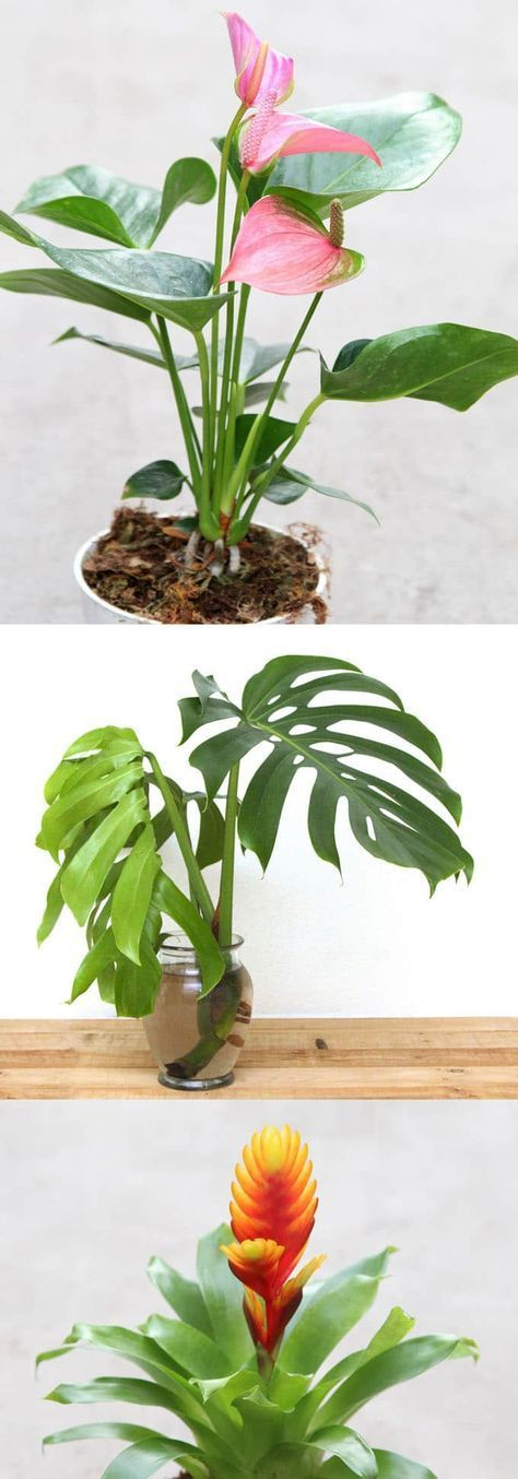 12 Best Air Purifying Indoor Plants Bring Beauty And Well 400 x 300