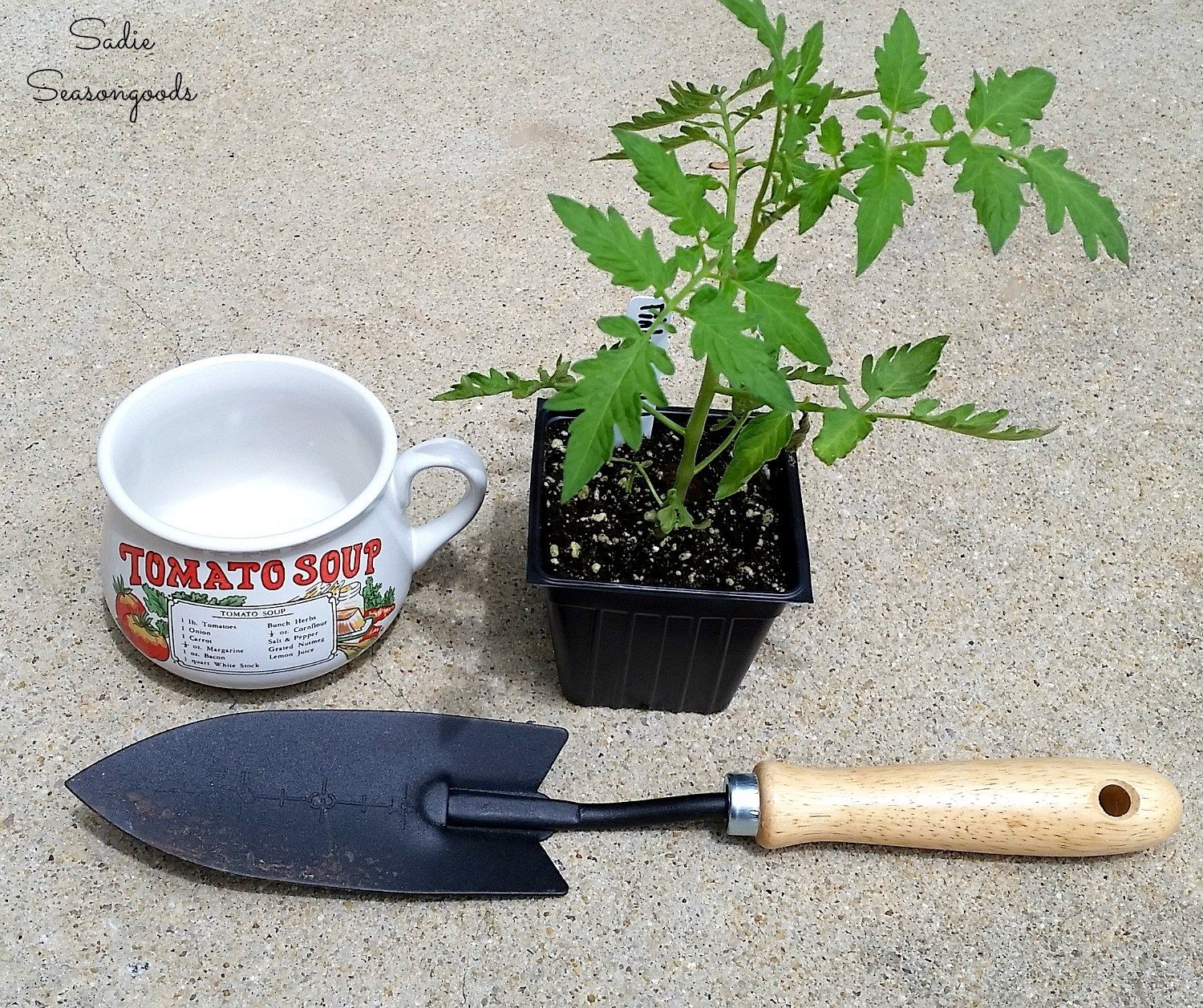 Soup Mug as Unique Planters for Small Gifts or Gardening