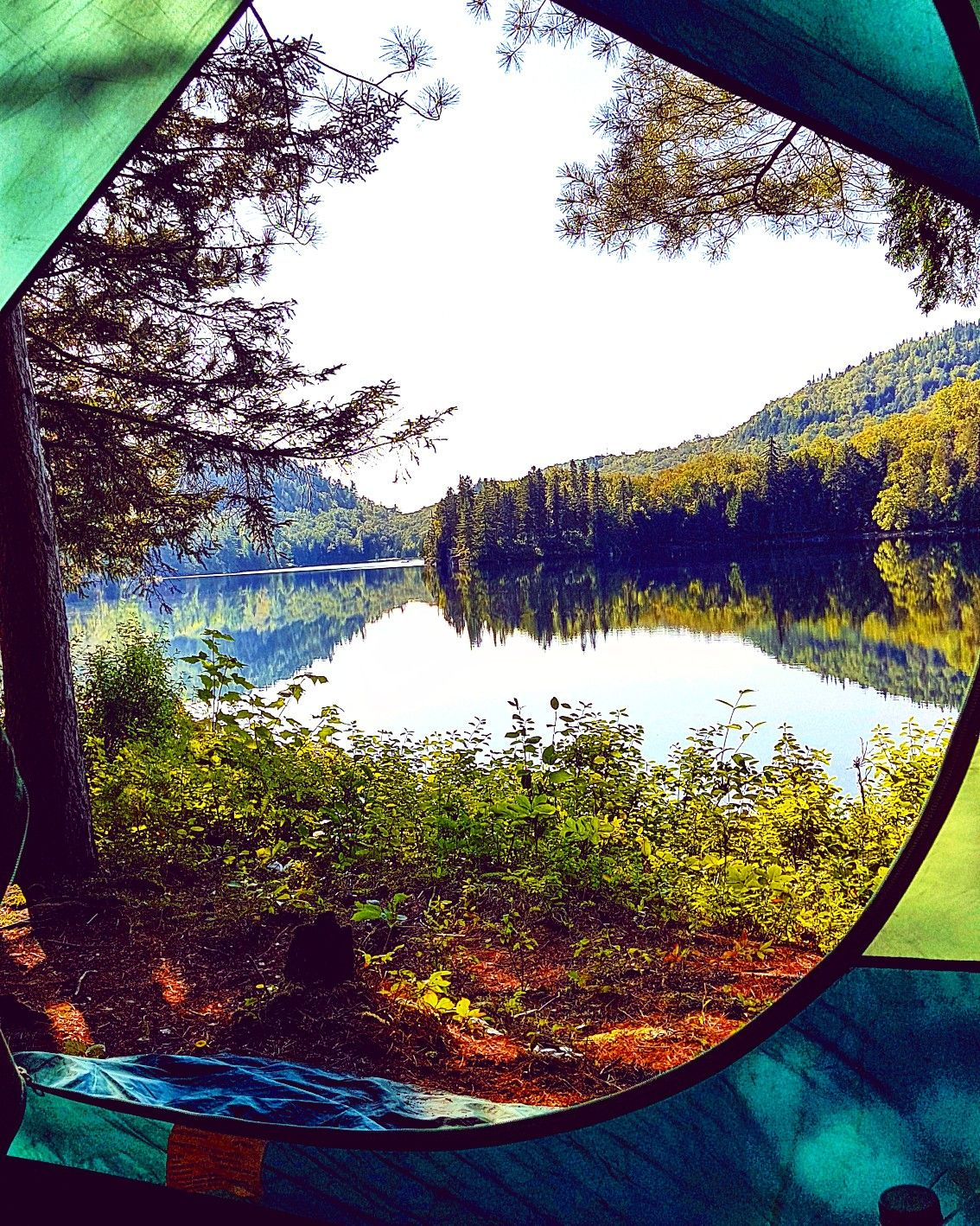Tent Wildlife Landscape Camping Lake Nature Forest Wood Trees Amazing Wow Mountains Goodvibes Zen Calm Canada Landscape Nature Lake