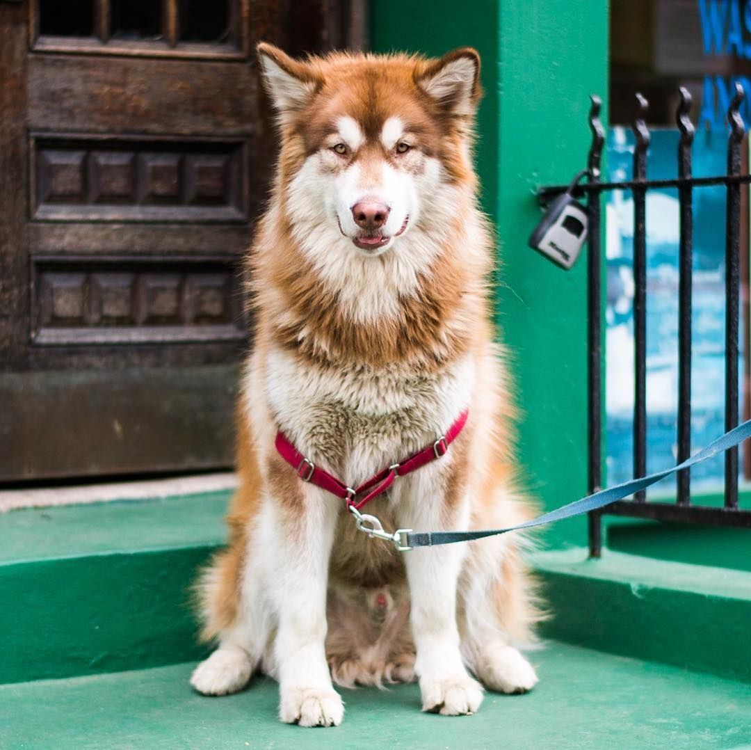 43.4k Likes, 233 Comments The Dogist (thedogist) on