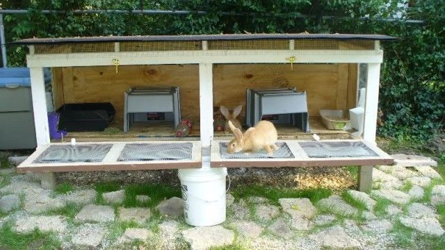 10 Free Rabbit Hutch Building Plans And Designs