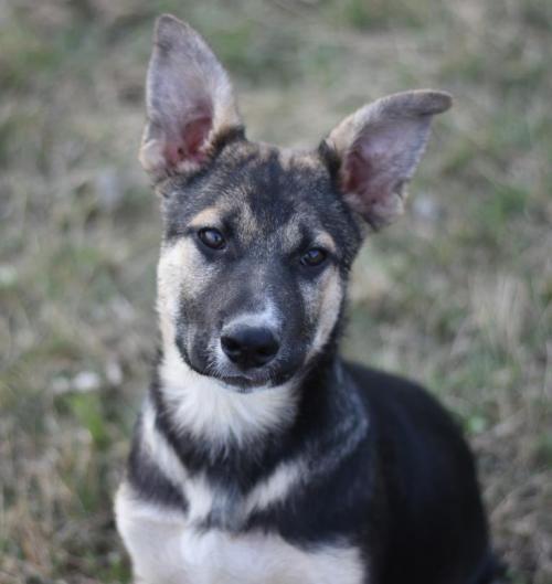 I found Uber on German shepherd dogs, Dogs, Shepherd dog