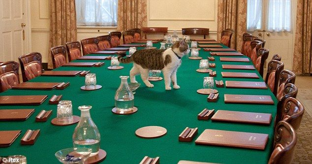 Where S Larry When You Need Him Prime Minister Throws Cutlery At Downing Street Mice As Moggy Boycotts Rat Catching Duties Cats Bengal Cat Facts Modern Cat