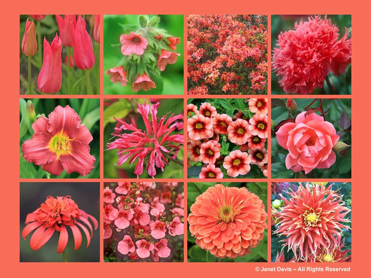 SalmonOrange FlowersThePaintboxGarden What can I paint