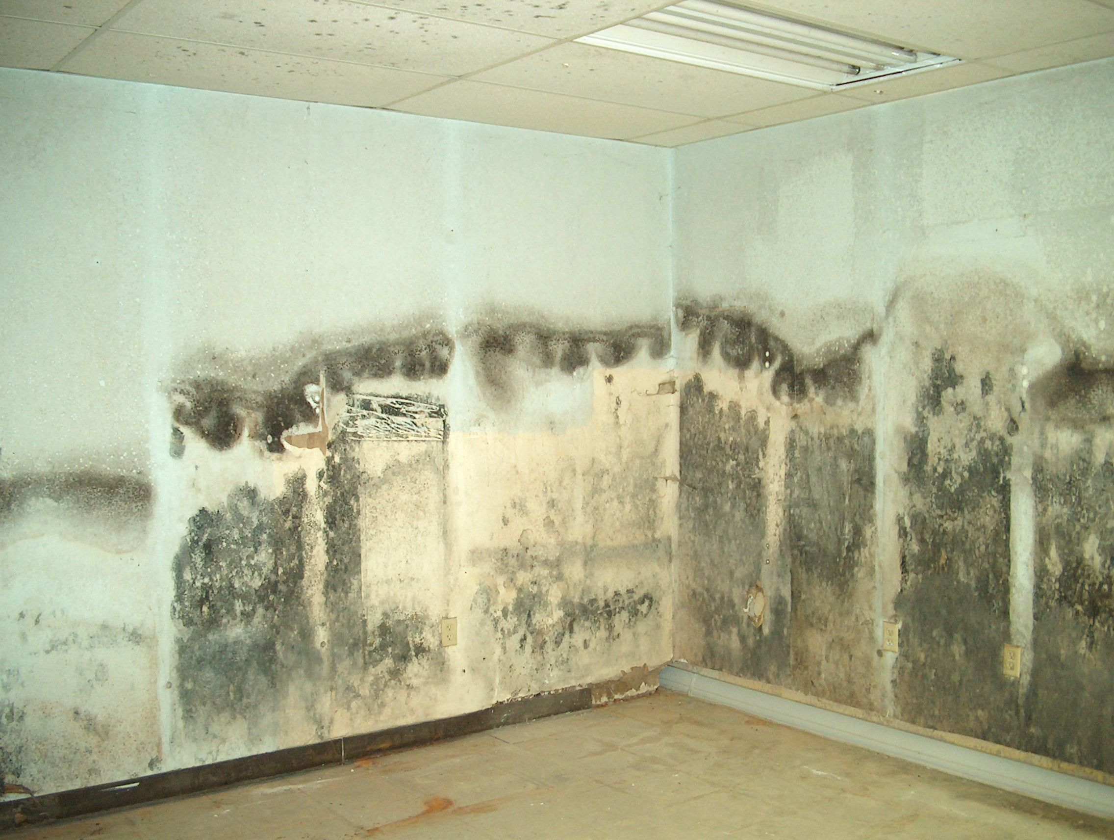 mold damage removal and remediation