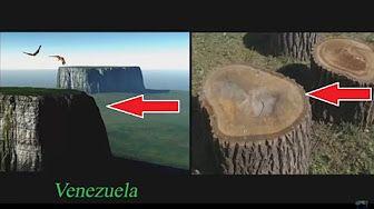 arboles de 60 km altura, NO HAY BOSQUES EN LA TIERRA