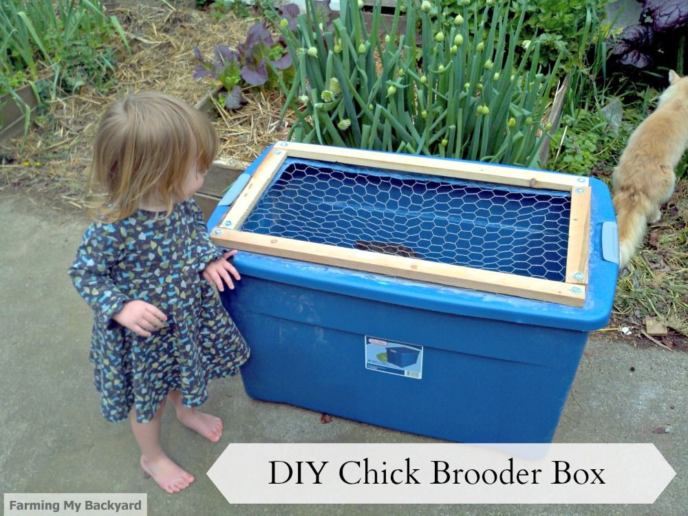 Charmant Hereu0027s How To Make Your Own Chick Brooder Box   Farming My Backyard